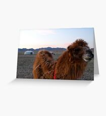 Mongolian Two Humped Camel Greeting Card