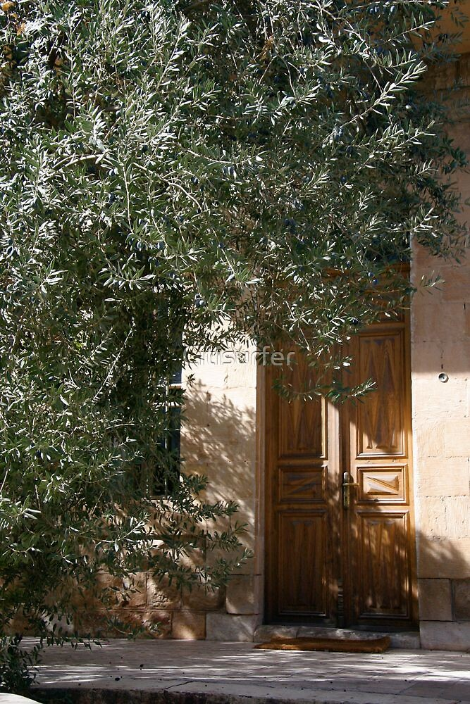 In the shade of an Olive Tree by Citisurfer