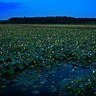 August's Full Lotus Moon by Owed To Nature