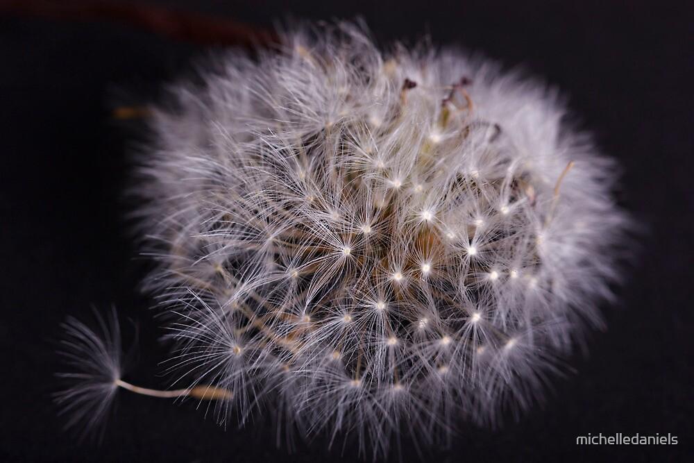 Dandelion by michelledaniels