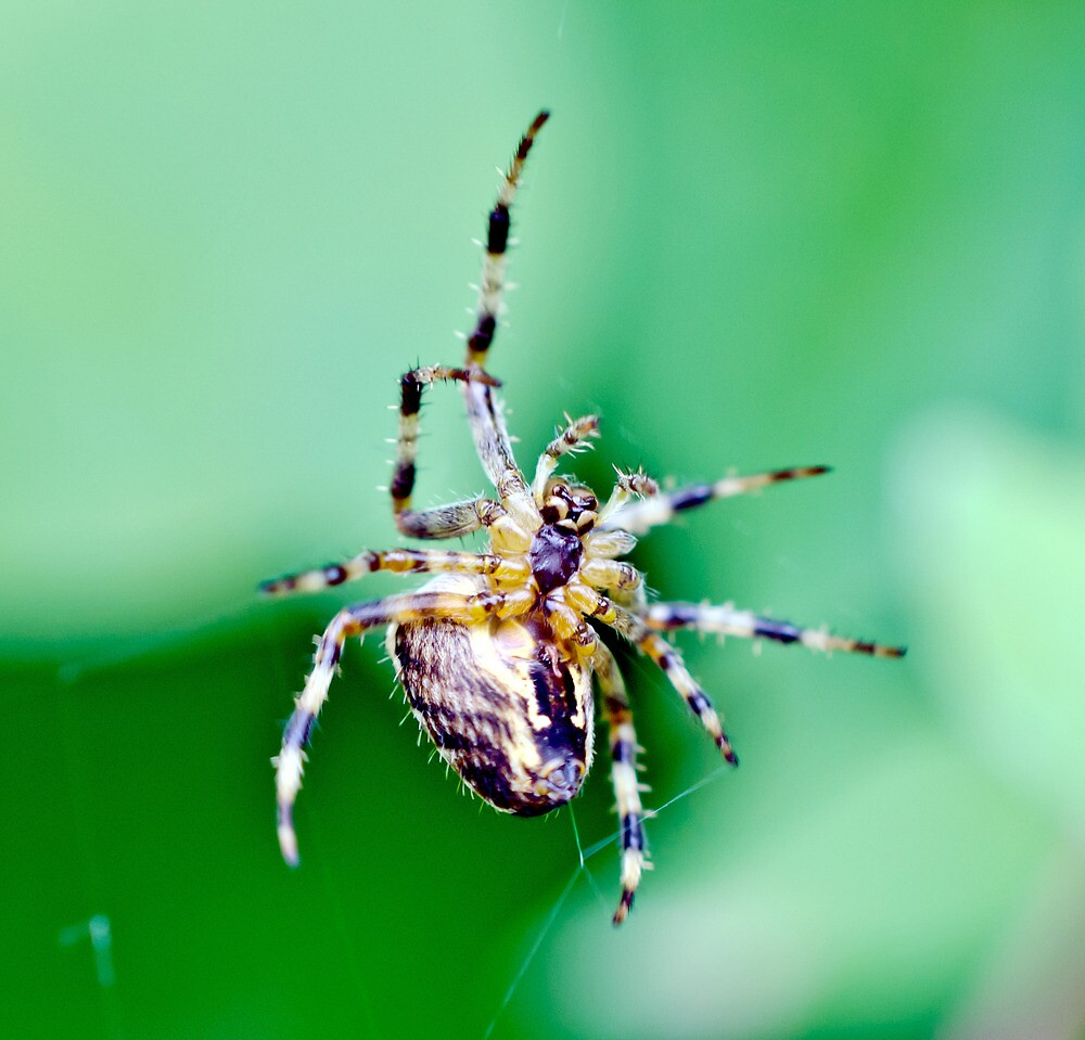 Spinning a web by Paul Spear