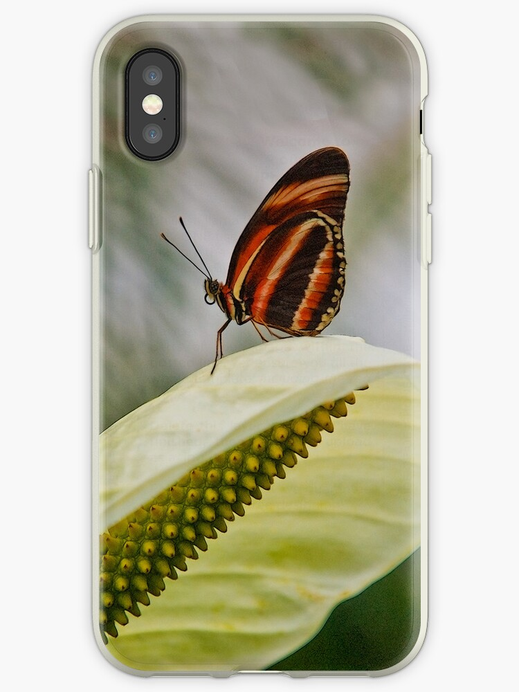 Exotic Butterfly by pahit