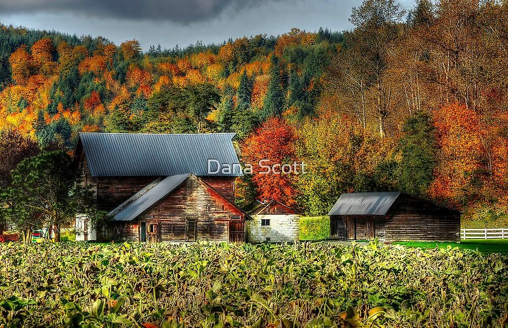 Carnation Farm by Dana Scott