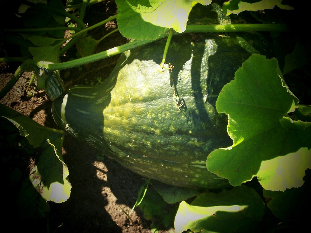 Now this is a squash! by Doreen Gilbert