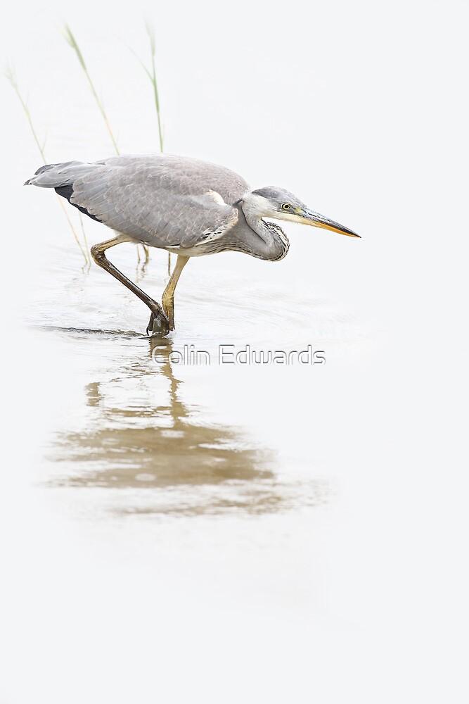 High Key Heron by Colin Edwards
