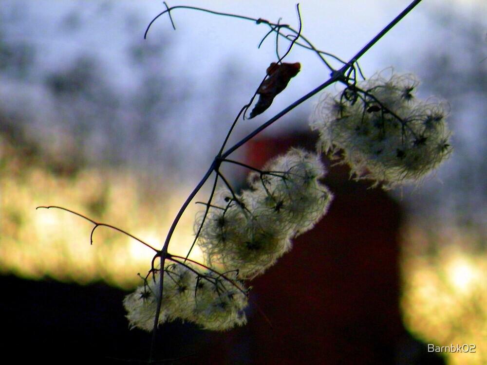 Winter Vine by Barnbk02