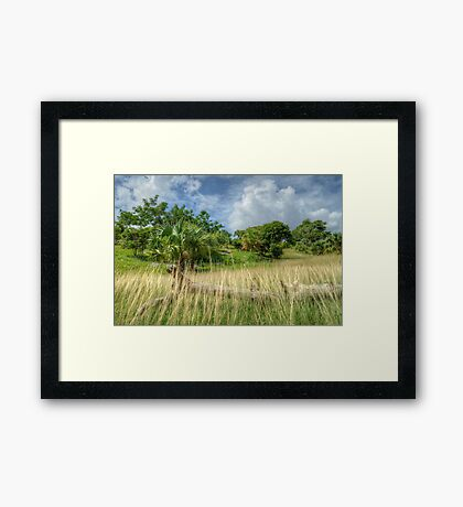 Country Side in Nassau, The Bahamas Framed Print