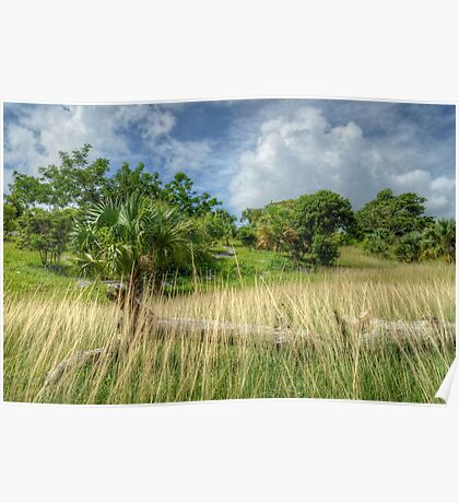 Country Side in Nassau, The Bahamas Poster