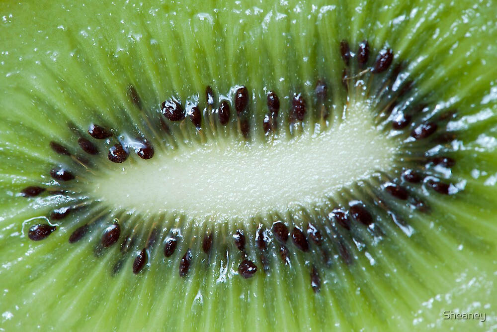 Kiwi Fruit by Sheaney