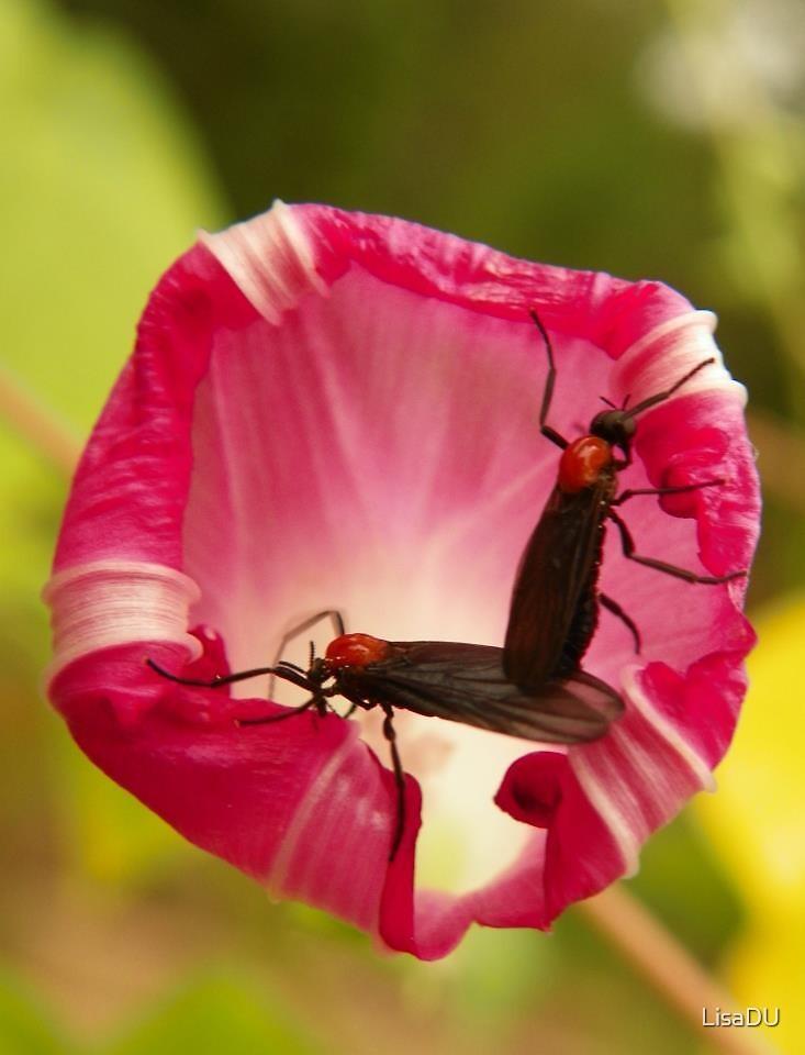 Love bugs by LisaDU