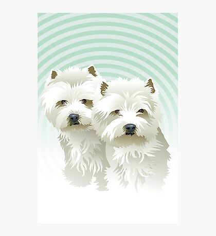 westies (mother and daughter) Photographic Print