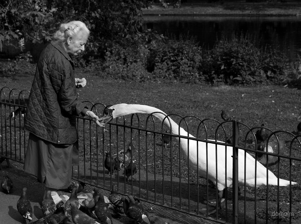 Old Lady & The Swan by domolm
