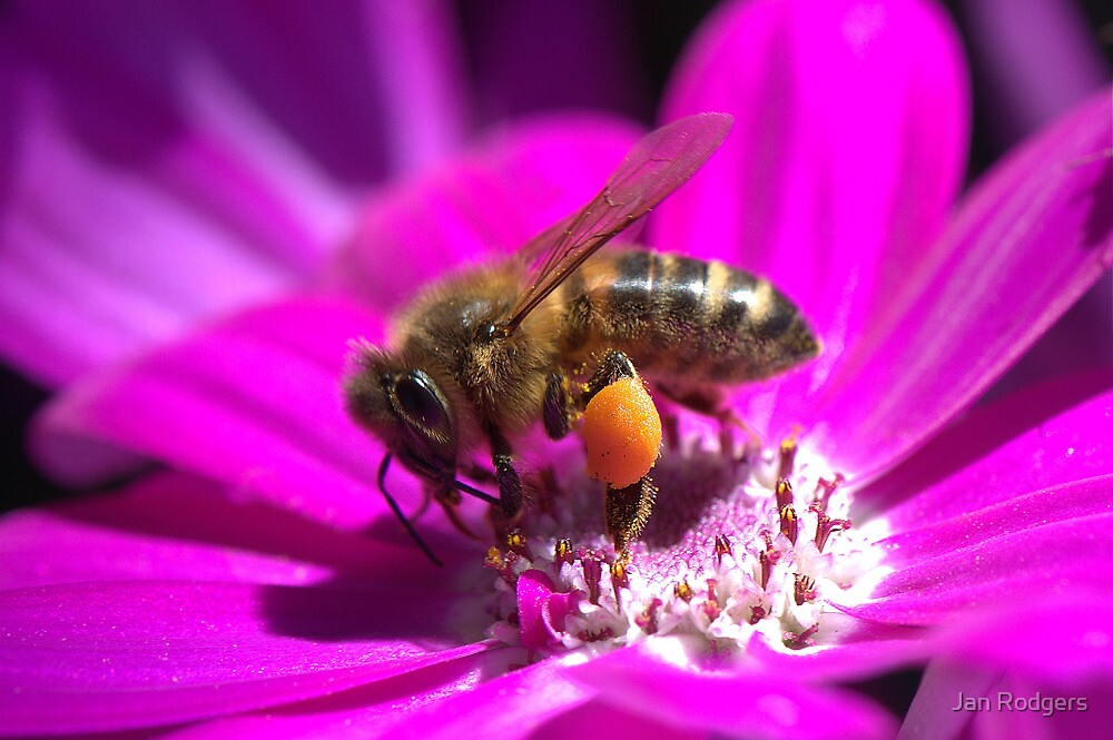 Bee Beautiful by Janette Rodgers