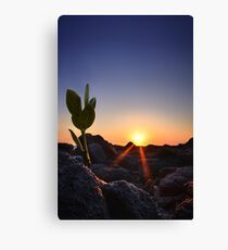Because She Asked Canvas Print