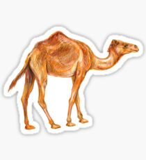 Camel dromedary  Sticker