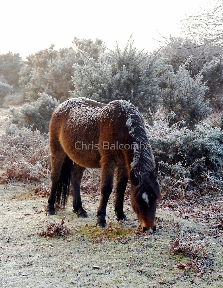 The New 'Frosted' Pony! by Chris Balcombe