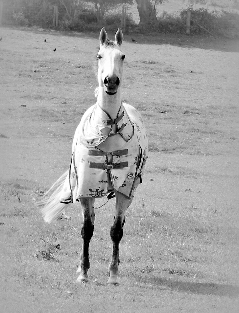 white horses in wales  by welshmel