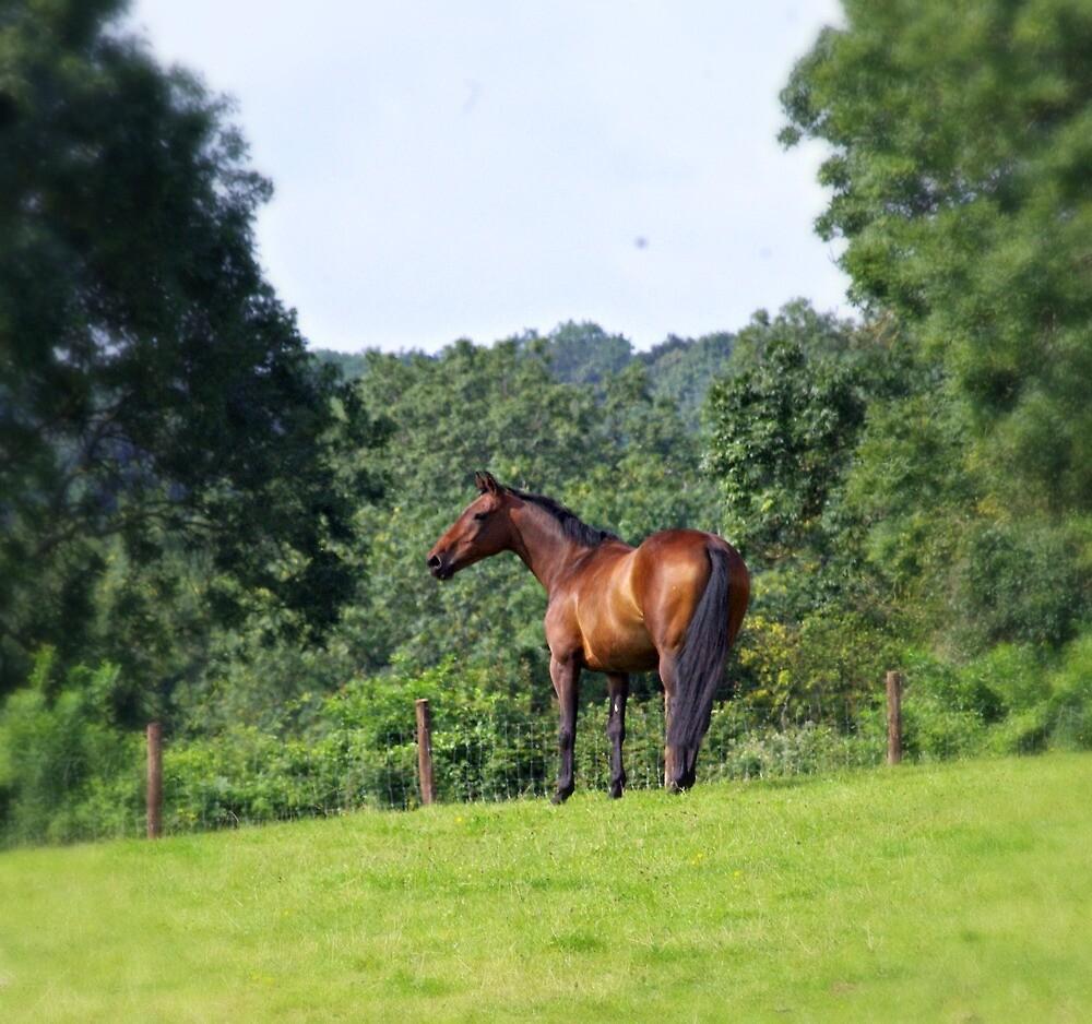 horses in beautiful wales by welshmel