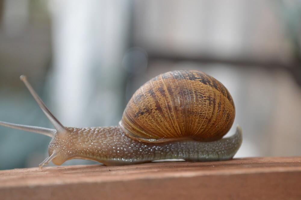 snail by welshmel