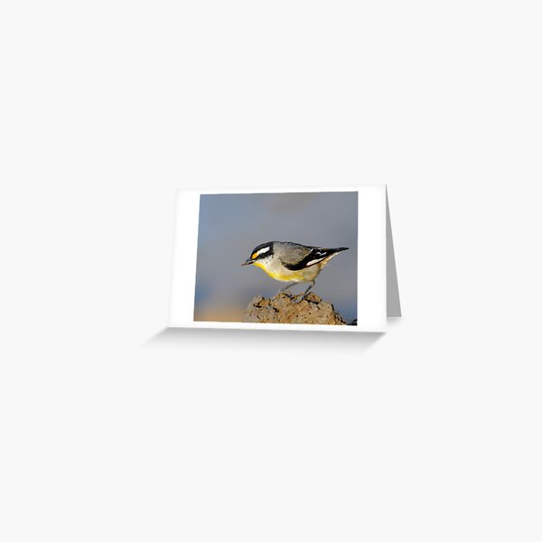 Striated Pardalote  #1 Greeting Card