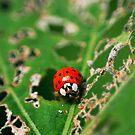 Ladybird by EkaterinaLa