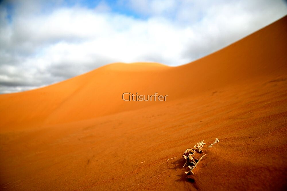 Bones in the sand by Citisurfer