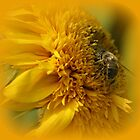 Sunflower with Bee by hanslittel