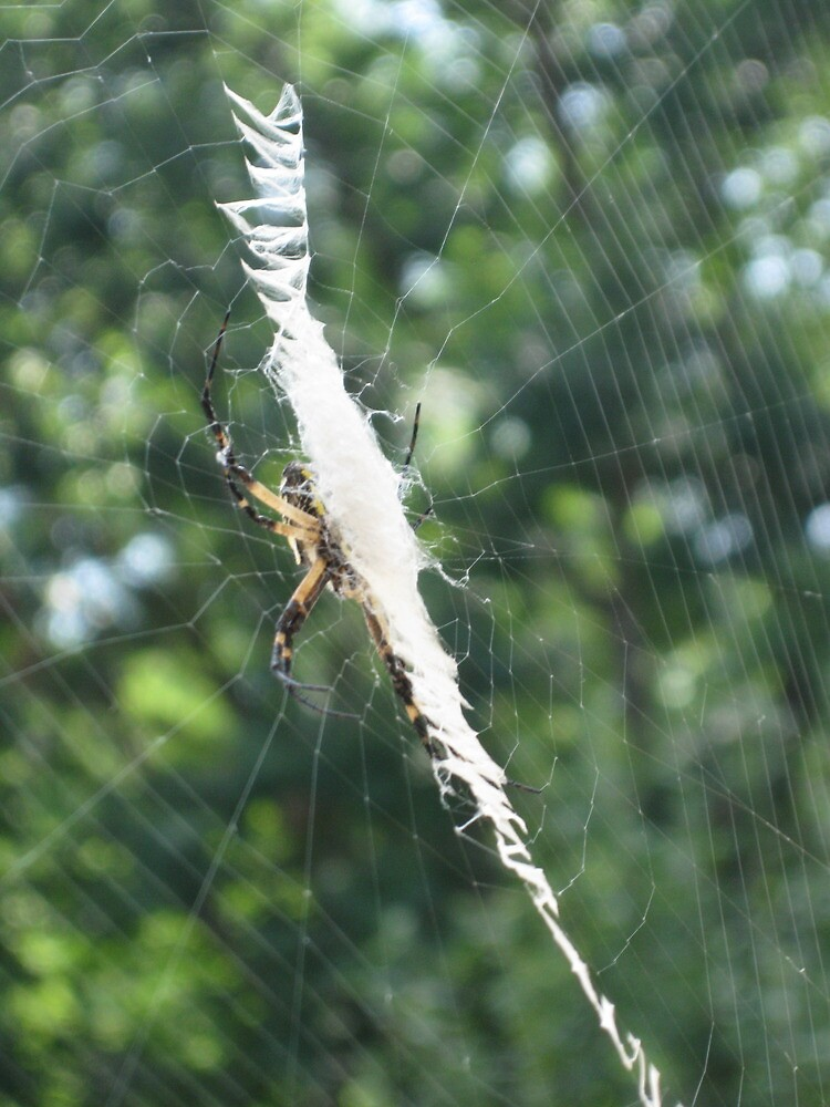 Zig Zag Spider by Copapod