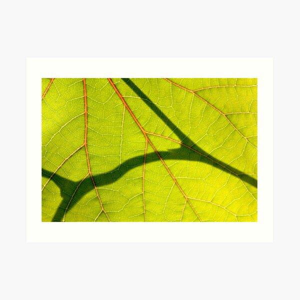 *Love Veins* Art Print