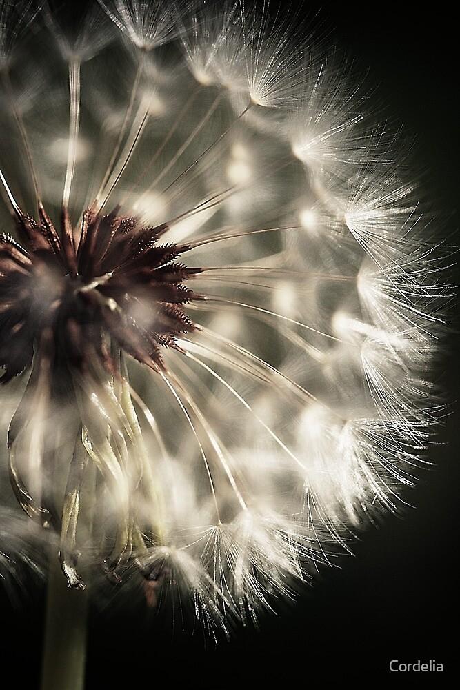~ dandelion 2 ~ by Cordelia