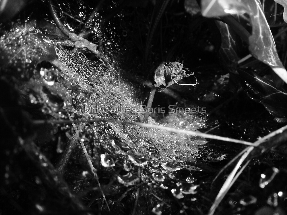Wet Webs by Miku Jules Boris Smeets