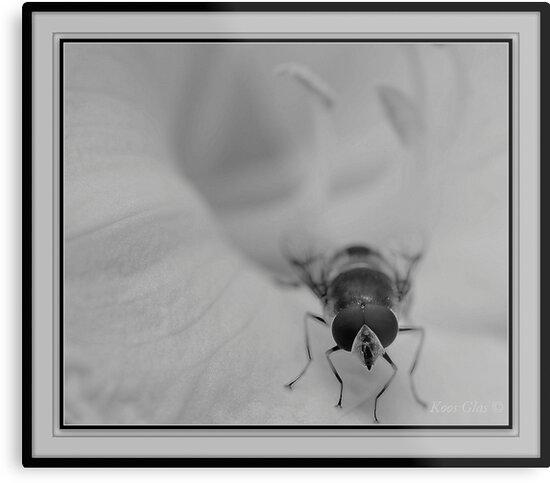 Happy Bee by KoosG