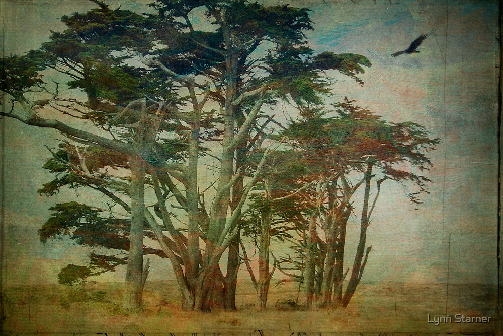 Stand of Cypress by Lynn Starner