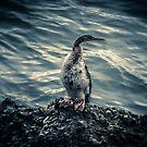 Early bird gets the worm by Kim Austin