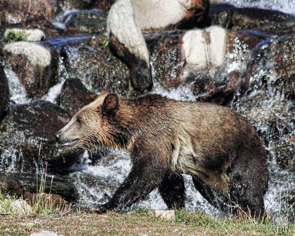 Grizzly Cub by Gene Praag