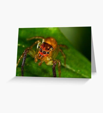 Jumping Spider (Cytaea xanthopus) Greeting Card