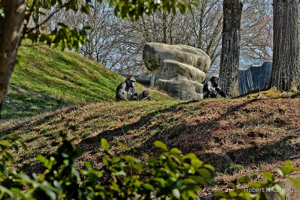 Atlanta Zoo Inmates... by Robert H Carney