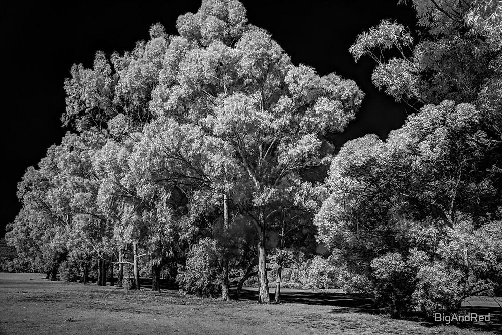 Westfield Herron Reserve by BigAndRed