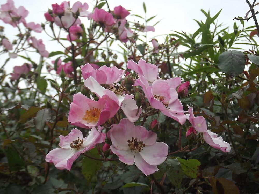 Hedgerow by flowerpot23