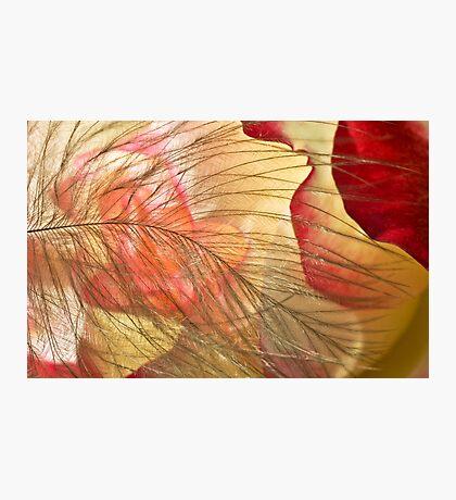 Petal's Womb Photographic Print