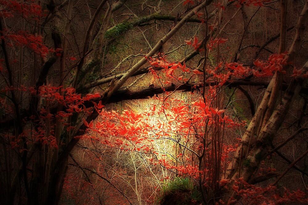 AUTUMN COLOUR by leonie7