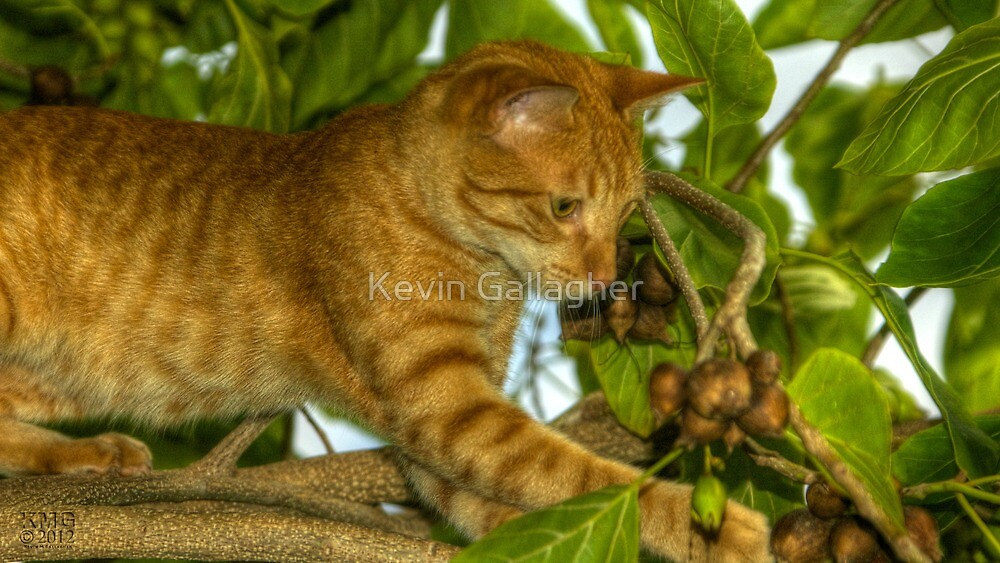 Tabby (Cat) in a Tree by Kevin Gallagher