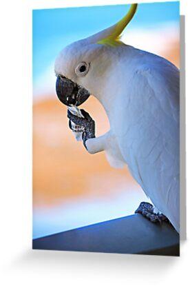 Sugar Please! (Hamilton Island, Australia) by MelissaSue