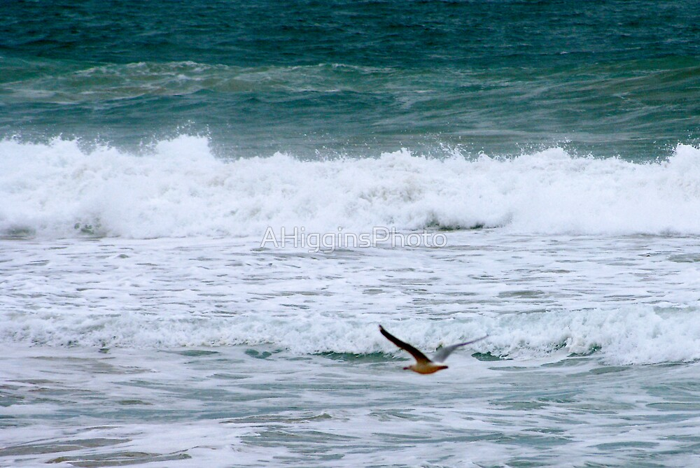 Seagull Surf by LoveAphoto