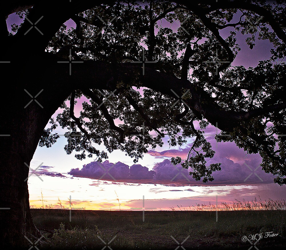 Wet Season Sunset, Derby Marsh. by Mary Jane Foster