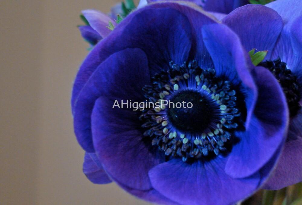 Purple Poppy by LoveAphoto
