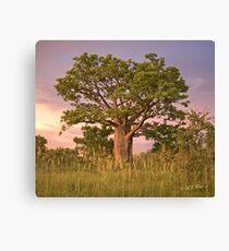 Boab Tree facing sunset. Canvas Print
