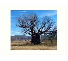 Boab Tree in the Cockburn Ranges, Kimberley. Western Australia. Art Print