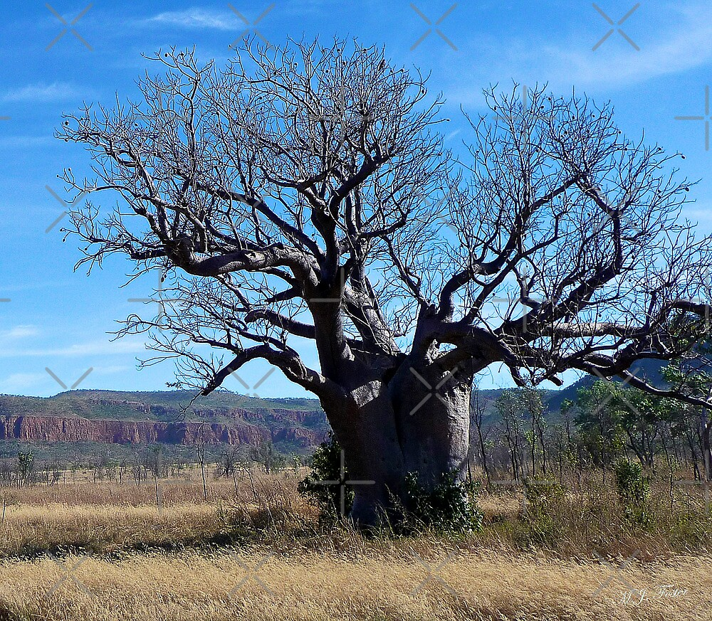 Boab Tree in the Cockburn Ranges, Kimberley. Western Australia. by Mary Jane Foster