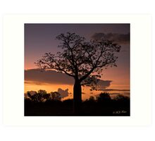 Boab Tree at sunset along the Derby Highway. West Kimberley Region of Western Australia. Art Print